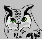 Owls by SoundMatch