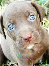 Big Blue Eyes by Paddyy