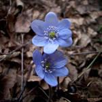Precious Blue by RavenMontoya