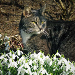 I'm guarding the spring so it won't go away again! by RavenMontoya