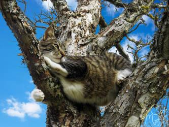 I just really love trees! by RavenMontoya