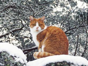 Winter is my prettiest season, don't you think? by RavenMontoya