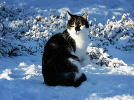 The snow should feel honoured I want to sit on it! by RavenMontoya