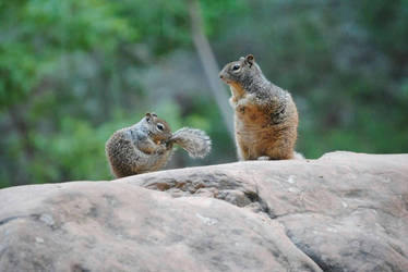 Squirrels of Utah  by Dinolover3