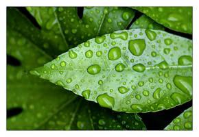 A New Leaf by dougbtn
