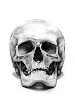skull_1 by RaetElgnis