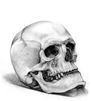 skull_2 by RaetElgnis