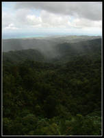 El Yunque Rainforest by kessalia