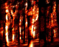 The Tangle of Burning Trees by bravonight