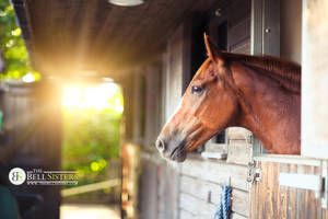 Chestnut Horse by thesashabell