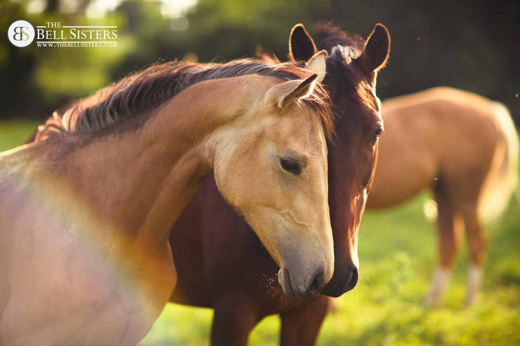 Buckskin Filly by thesashabell