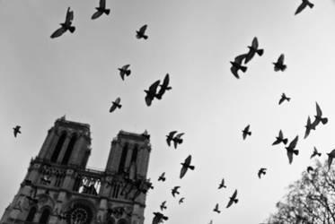 Notre Dame by siyabonga