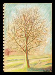 Tree Clapham Park by Fecciax