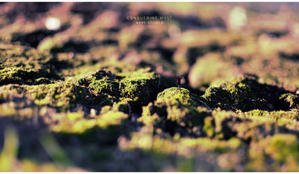 Conquering Moss by Toas7y