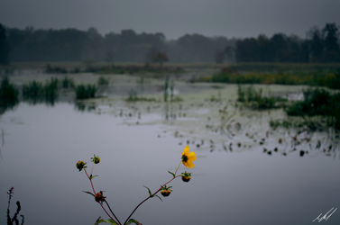 Overcast: #1 - Flower by Toas7y