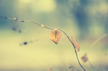 Leaf by rob-i