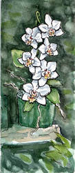 White Orchids by angelac