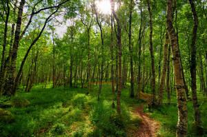 Norwegian Wood by VerticalDubai