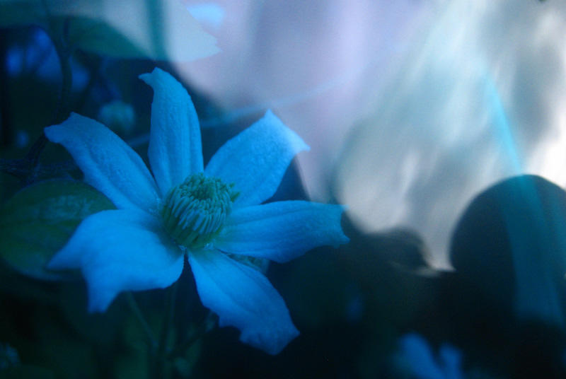 Surreal flower by ahlberg
