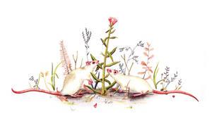 Two white mice by Lu-Art