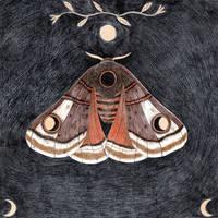 Moth, dark background by Lu-Art