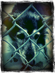 Don't Breed or Buy While Shelter Pets Die by Little-Dust-Bunny