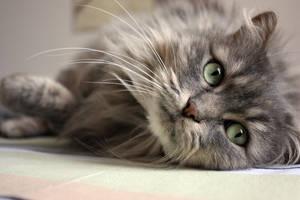 My cat : Mina - 4 by stntoulouse