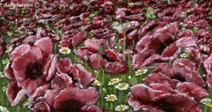 Poppy field 1 by AnnaZLove