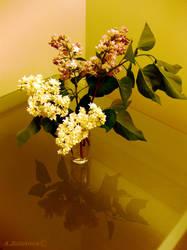 A hopeful Blossom 2 by AnnaZLove