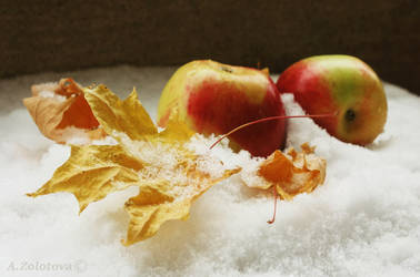 Apples in the snow 1 by AnnaZLove