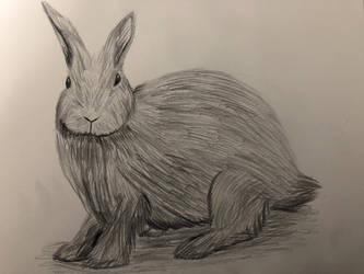 Rabbit Drawing  by Wolfsongamp