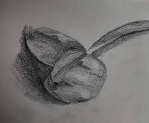 Drawing of random flower I found on the ground  by Wolfsongamp