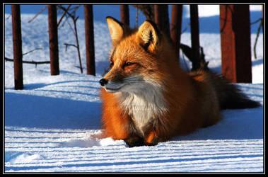 Fox 5 by Ptimac
