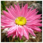 Of Joyous Colors by Jenna-Rose