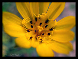 The Color of Sunshine by Jenna-Rose