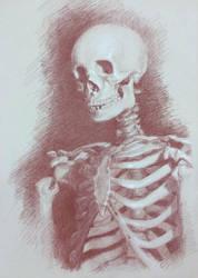Skeleton Study by Zhrayde