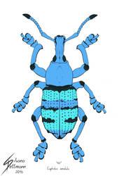 Eupholus amalulu (colored) by Dragunalb