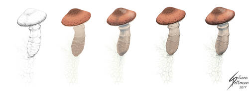 Armillaria ostoyae fungus fruits (color test) by Dragunalb