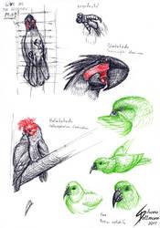 Loro Parque Parrots study by Dragunalb