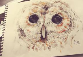 owl by Denor