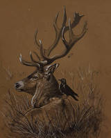 WBS: stag by Atropicus