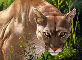 Cougar Painting by Atropicus