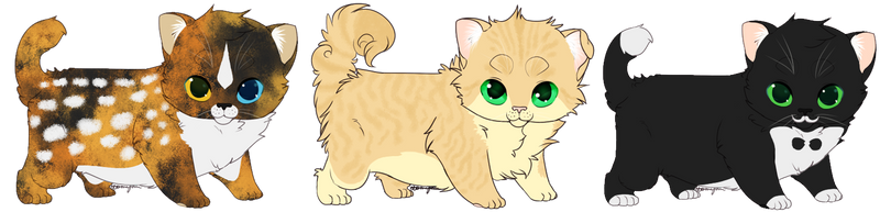 Kitten Adoptables -OPEN- by Feral-Spirit
