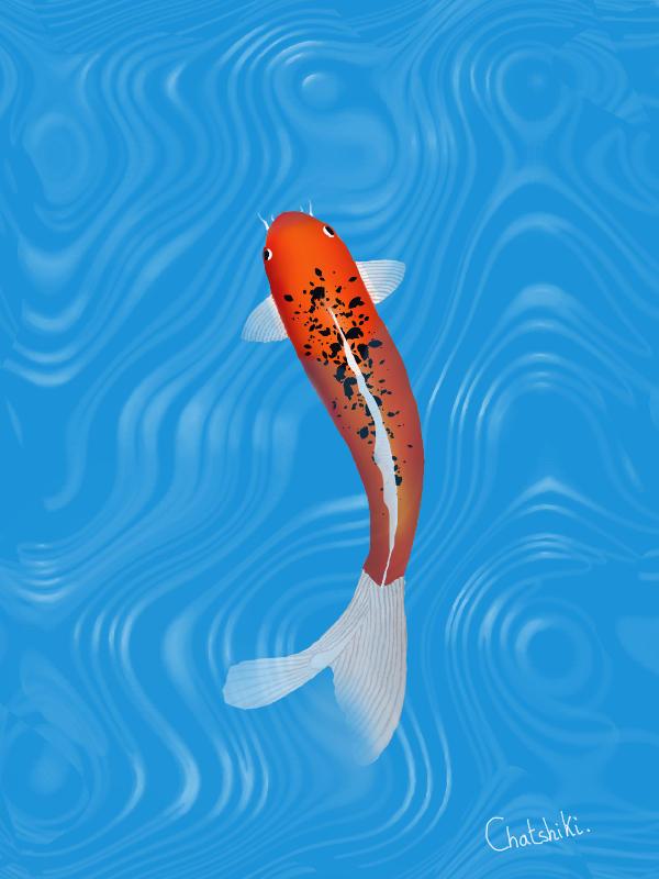 Carpe koi / Koi fish by Chatshiki