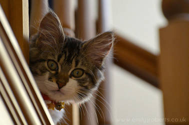 Cat Bannister by Deepsies