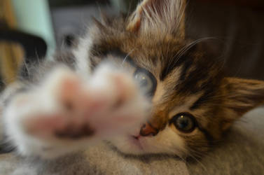 Kitten Reaches Out by Deepsies