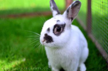 Eddie Bunny by Deepsies