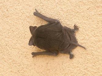 a bat at my window by blakemiller14