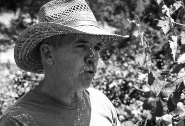 winemaker by pungen