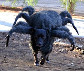 Spider Zoe by pungen